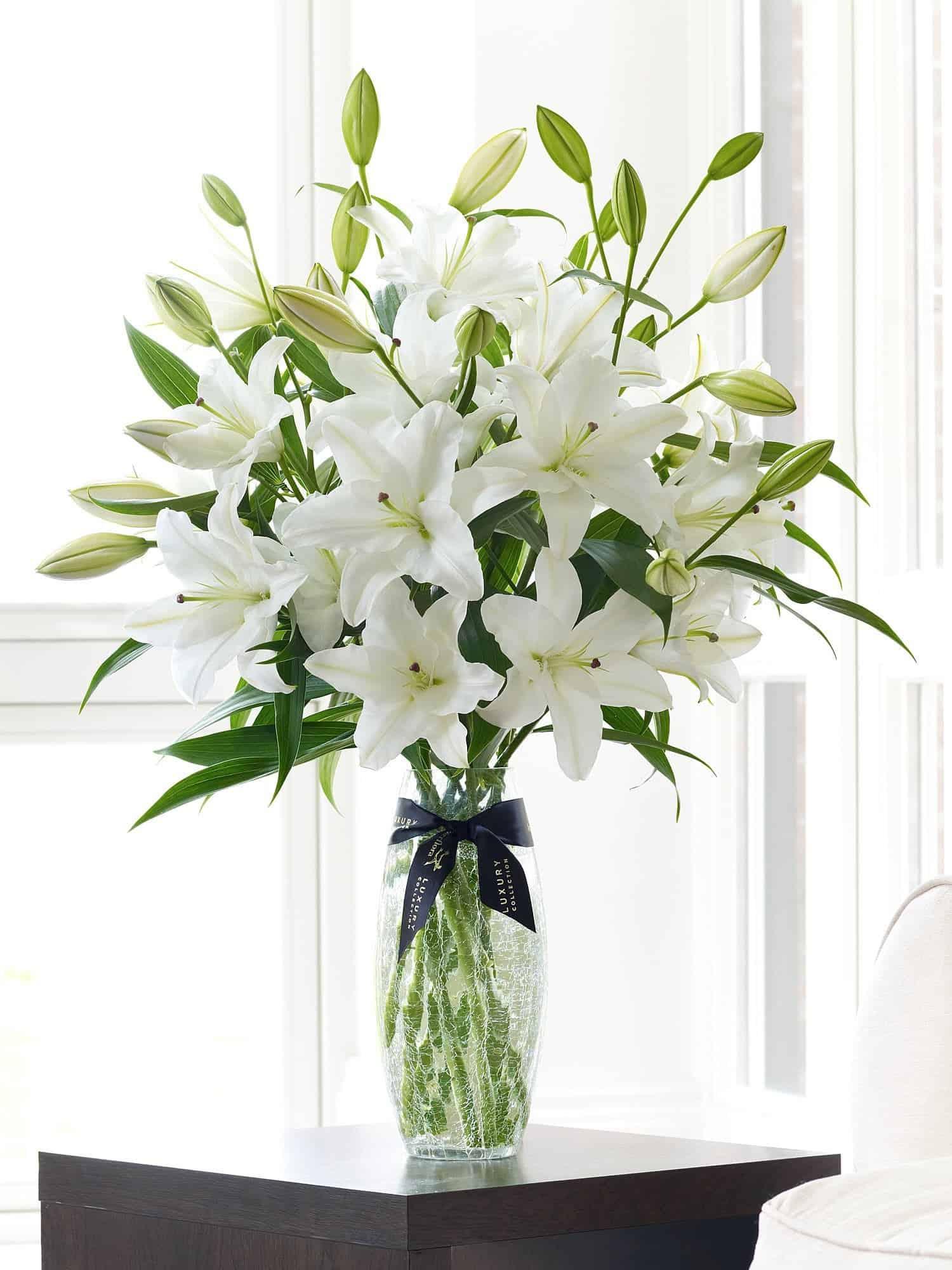 Luxury White Oriental Lily Vase Flowers Studio